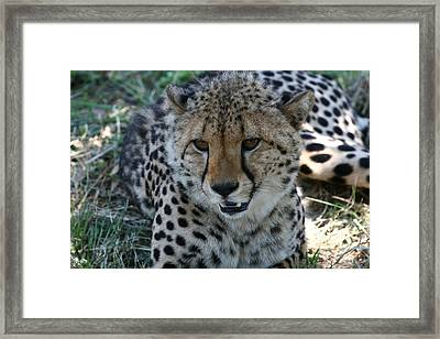 Beauty Framed Print by Andrei Fried