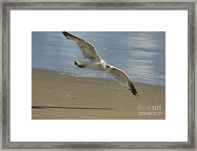 Beauty At The Beach Framed Print by Deborah Benoit