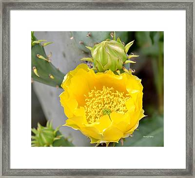 Beauty Begets Beauty Framed Print by Maria Urso