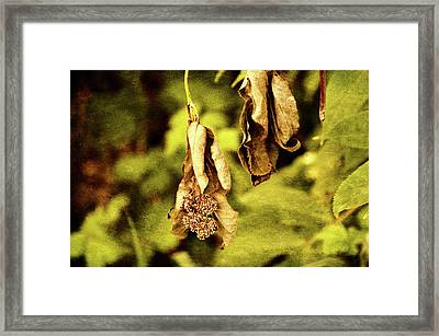Beauty Beyond Framed Print by Terrie Taylor