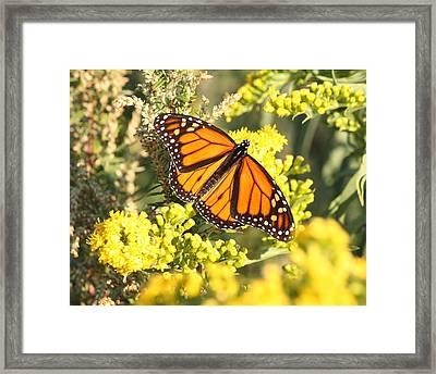 Beauty Defined Framed Print