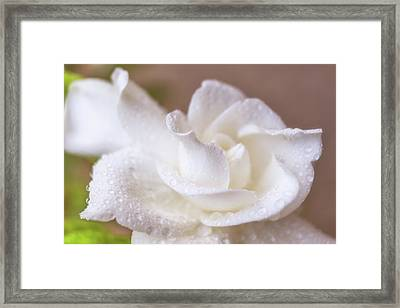 Beauty Defined Framed Print by Marnie Patchett