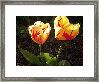 Framed Print featuring the photograph Beauty Duo by Don Struke