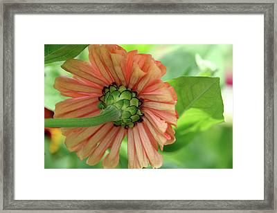Beauty From Behind Framed Print by Roxanne Marshal