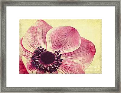 Beauty II Framed Print by Angela Doelling AD DESIGN Photo and PhotoArt