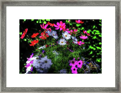 Framed Print featuring the photograph Beauty II by Tom Prendergast