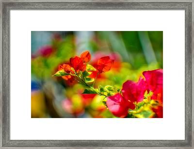 Beauty In A Blur Framed Print