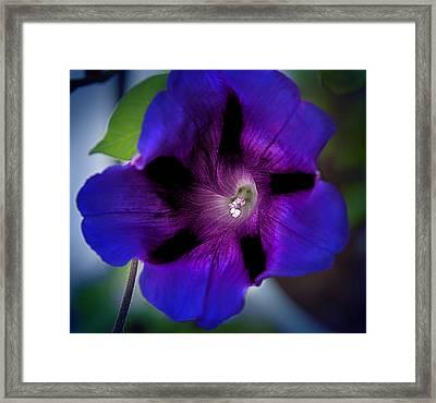 Beauty In Blue Framed Print