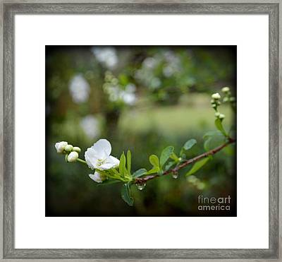 Beauty In Simple Things Framed Print by Eva Thomas