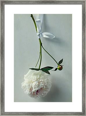 Beauty In Suspension Framed Print