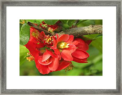 Beauty In The Branche Framed Print