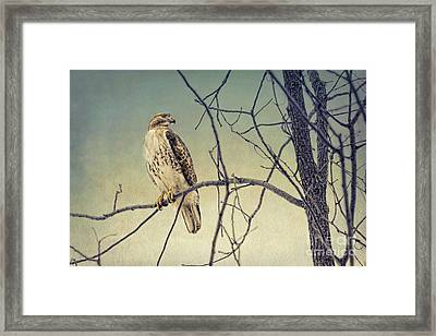 Red-tailed Hawk On Watch Framed Print