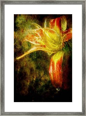 Beauty In The Darkness Framed Print