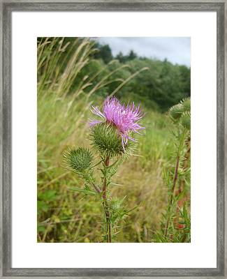 Beauty In The Grass Framed Print