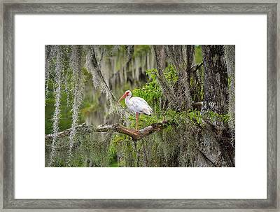 Beauty In The Moss Framed Print by Bill Chambers