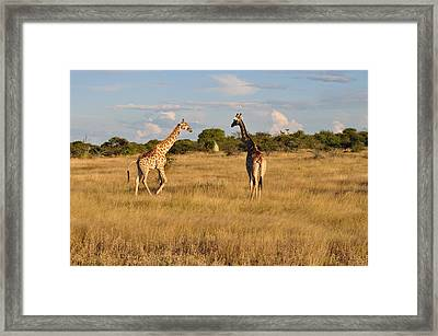 Beauty In The Sky Framed Print by Joe  Burns