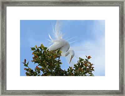 Framed Print featuring the photograph Beauty In The Treetop by Fraida Gutovich