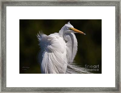 Beauty In The Wind Framed Print