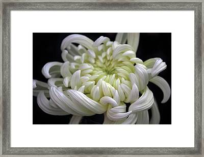 Beauty In White Framed Print by Jessica Jenney
