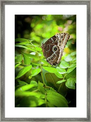 Beauty In Within Dotts Framed Print by Chad Davis