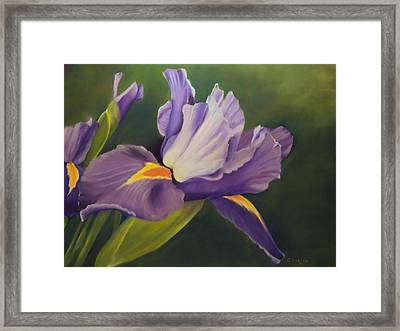 Beauty Is In The Iris Framed Print