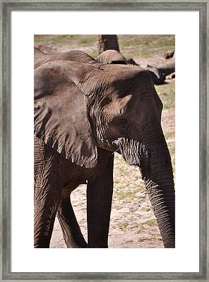 Framed Print featuring the photograph Beauty Is The Beast by John Knapko