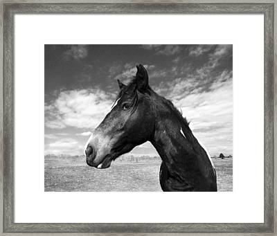 Beauty Framed Print by Jimmy Bruch