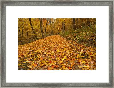 Beauty Landscape Autumn Forest View Framed Print