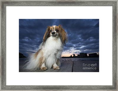 Beauty Framed Print by Leslie Leda