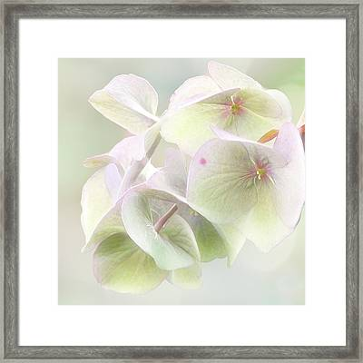 Beauty Mark Framed Print
