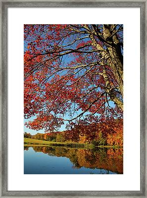 Framed Print featuring the photograph Beauty Of Fall by Karol Livote