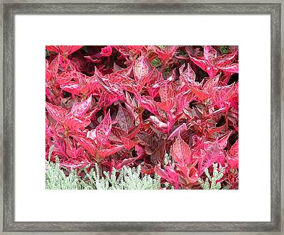 Beauty Of Nature Colors Framed Print