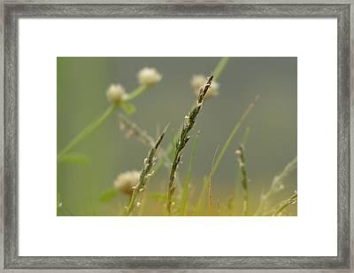 Beauty Of Simplicity Framed Print