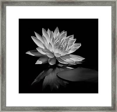 Beauty Of The Pond Framed Print
