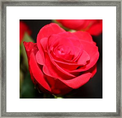 Beauty Of The Red Framed Print by Cathie Tyler