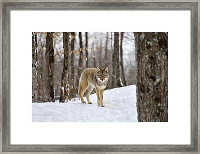 Beauty Of The Woods Framed Print by Joshua McCullough