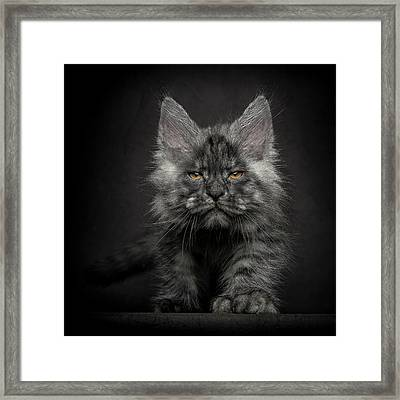 Framed Print featuring the photograph Beauty Or Beast by Robert Sijka