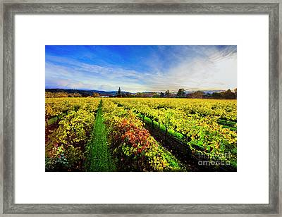 Beauty Over The Vineyard Framed Print by Jon Neidert