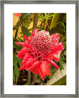 Framed Print featuring the photograph Beauty Red by Fanny Diaz