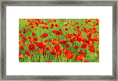 Beauty Red Poppies Framed Print