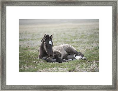 Beauty Rest Framed Print by Nicole Markmann Nelson
