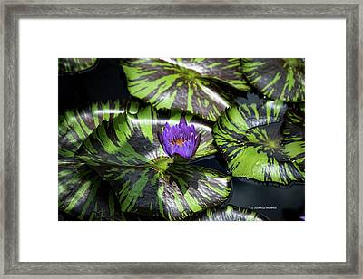 Beauty Rises To The Top Framed Print