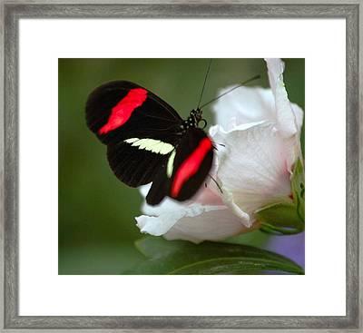 Beauty Framed Print by Scott Gould