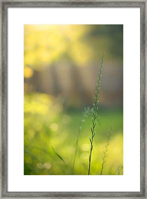 Beauty Shines Through Framed Print