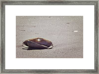 Beauty Star Framed Print by JAMART Photography