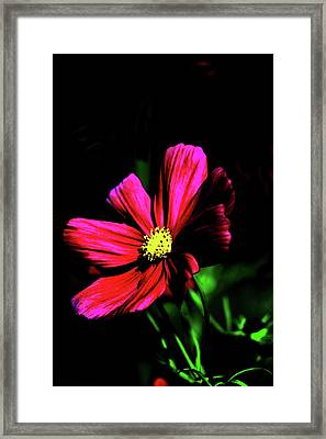 Framed Print featuring the photograph Beauty  by Tom Prendergast