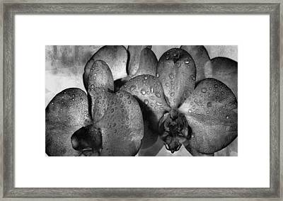Beauty Understated Framed Print