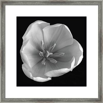 Framed Print featuring the photograph Beauty Within by Terence Davis