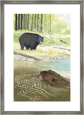 Beaver Framed Print by Denny Bond