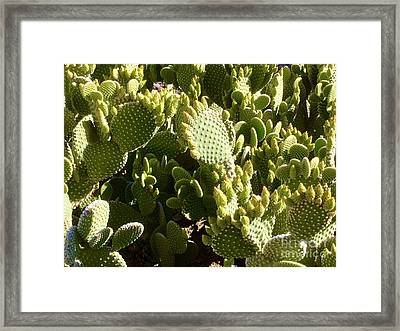 Beaver Tail Cactus, Cave Creek, Arizona Framed Print